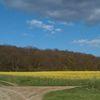 landscape in Düren-Niederau